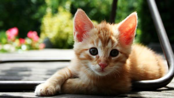 gatti cuccioli-2.jpg