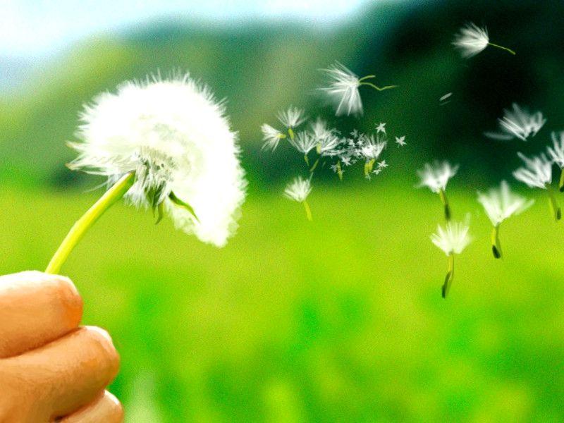 allergia-polline.jpg