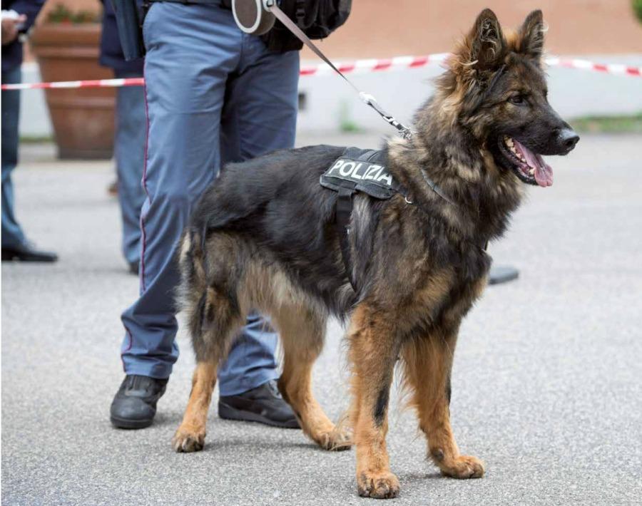 cani-poliziotto.jpg