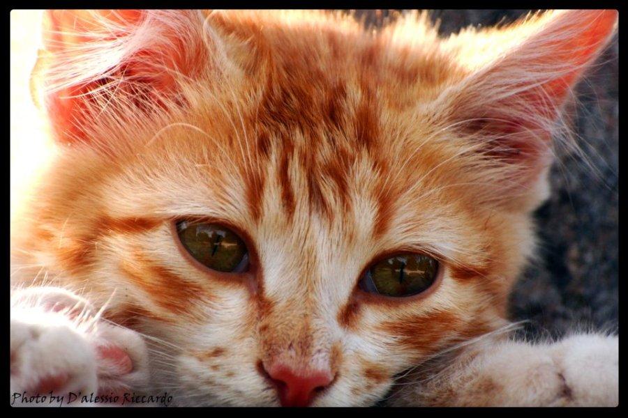 SUPER-CAT-SHOW-MOSTRA-FELINA-ROMA-7.jpg